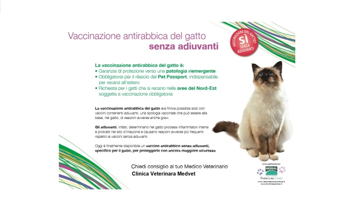 Poster rabbia gatto