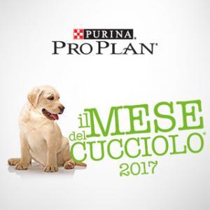 cucciolo_320x320_1